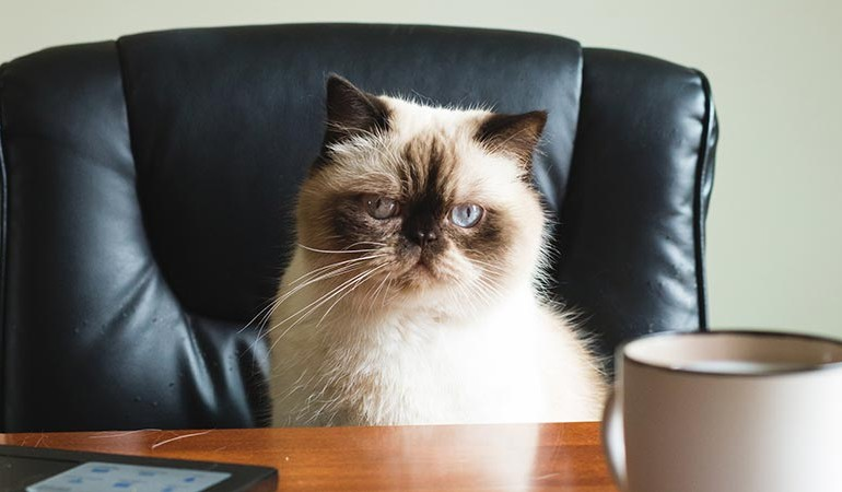 catper-prospect-cat